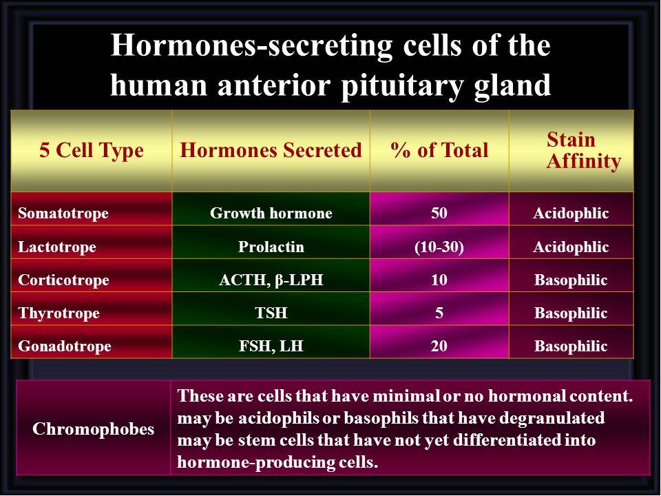 Hormones-secreting cells of the human anterior pituitary gland