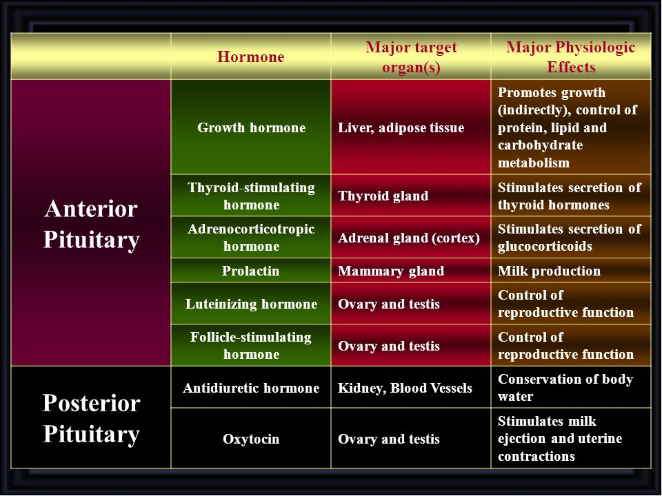 Anterior Pituitary Posterior Pituitary