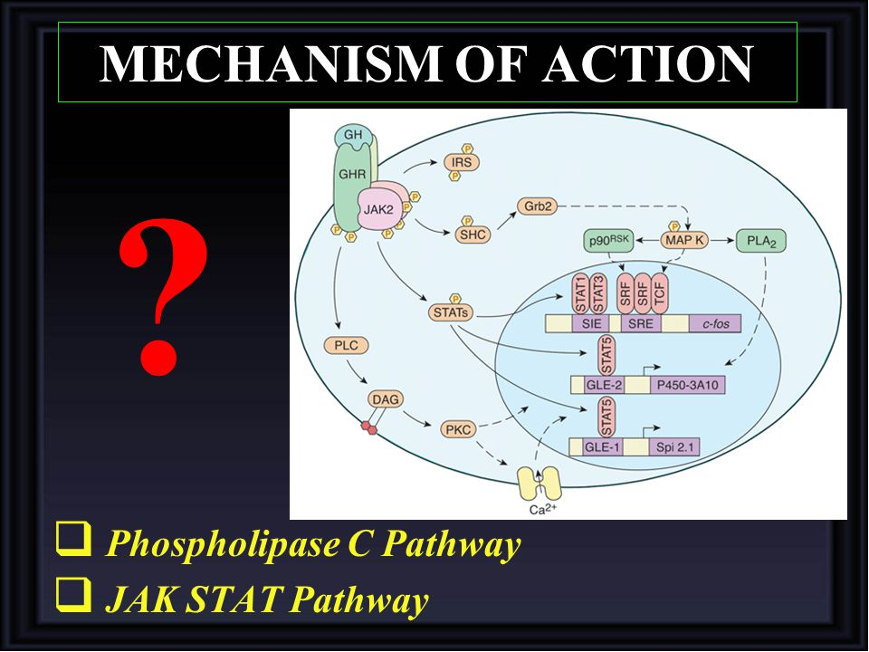 MECHANISM OF ACTION Phospholipase C Pathway JAK STAT Pathway