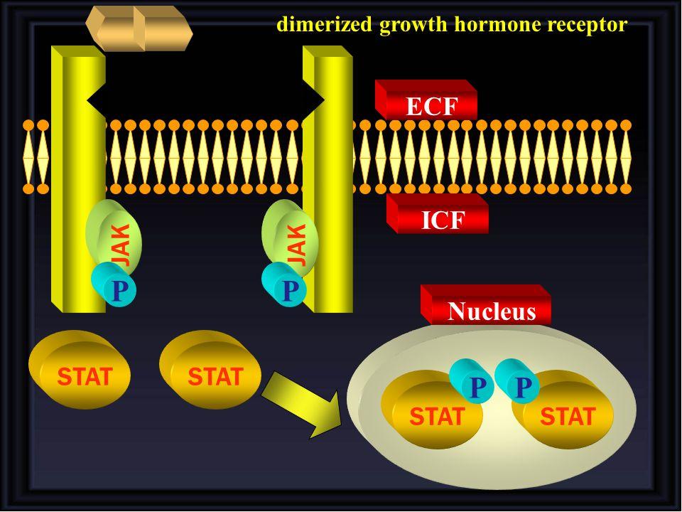 dimerized growth hormone receptor