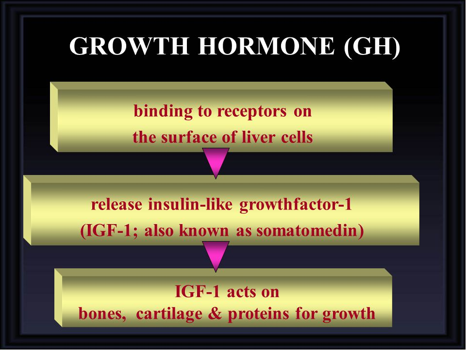 GROWTH HORMONE (GH) binding to receptors on the surface of liver cells