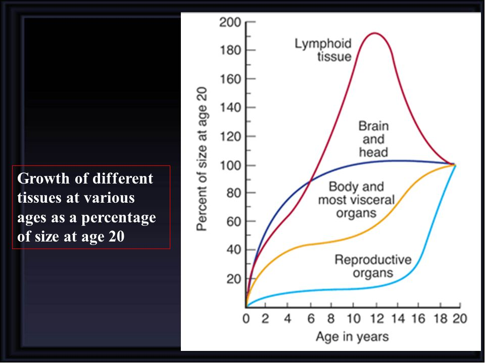 Growth of different tissues at various ages as a percentage of size at age 20