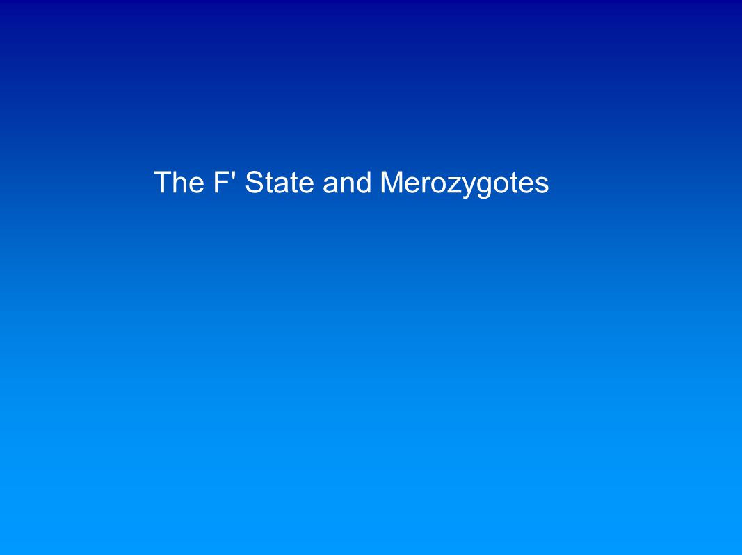 The F State and Merozygotes