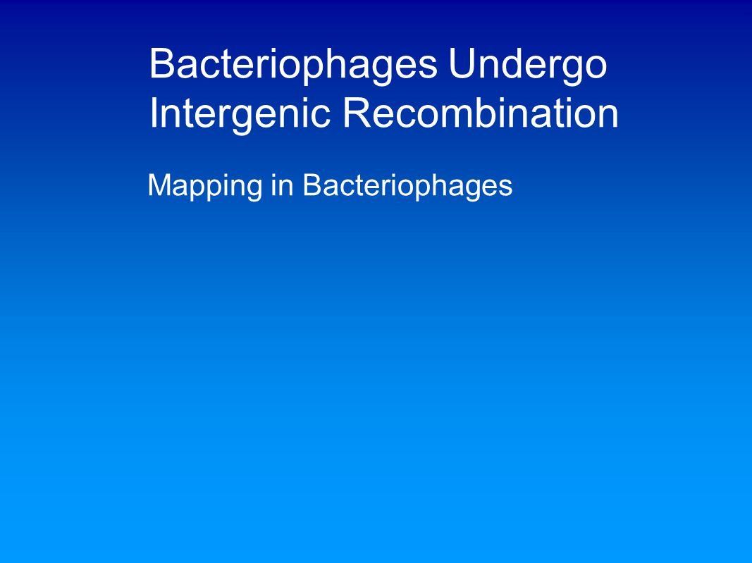 Bacteriophages Undergo Intergenic Recombination