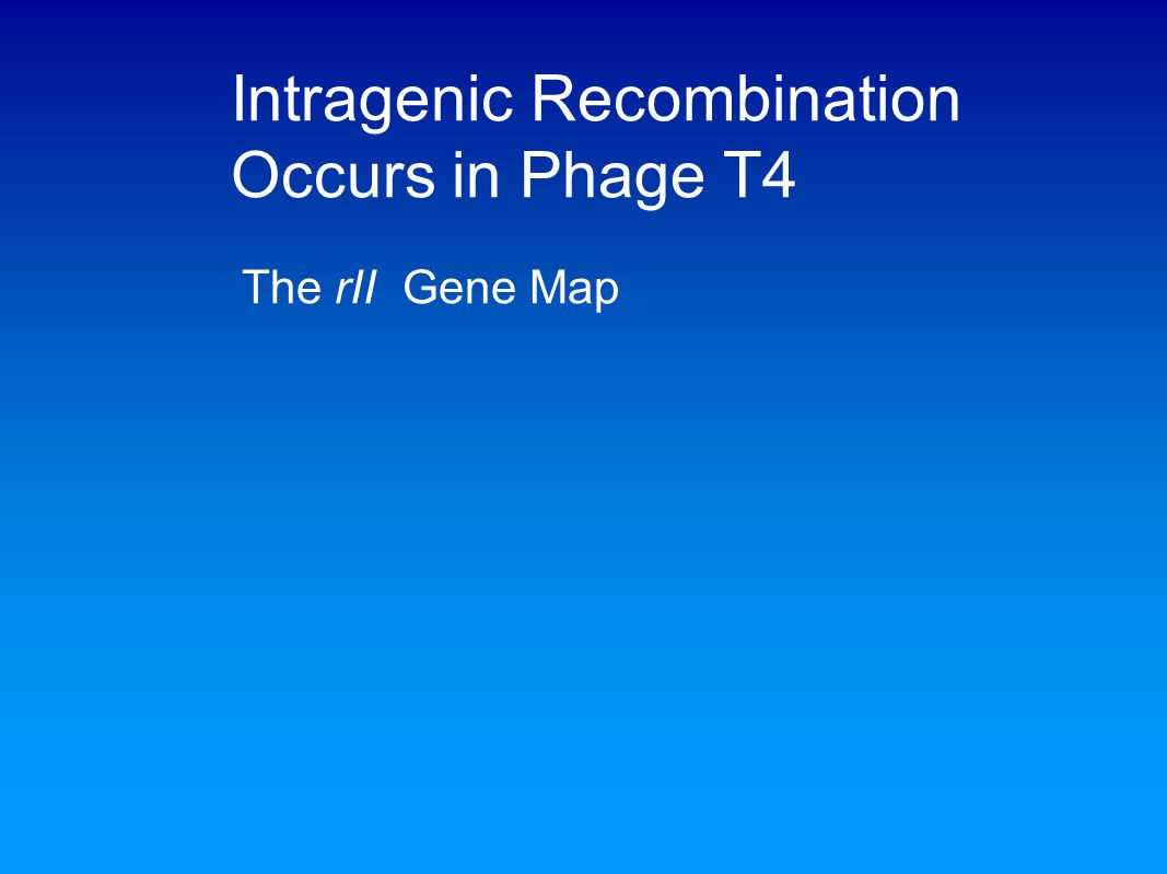 Intragenic Recombination Occurs in Phage T4