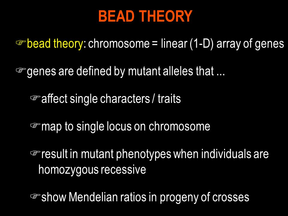 BEAD THEORY bead theory: chromosome = linear (1-D) array of genes