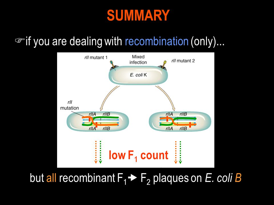 but all recombinant F1 F2 plaques on E. coli B
