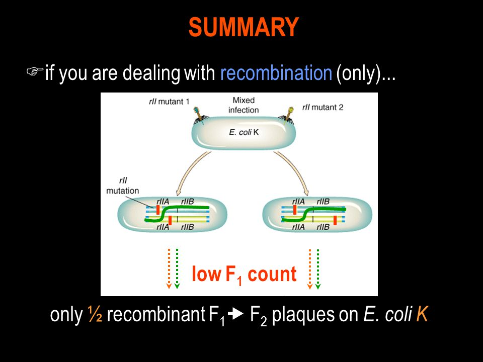 only ½ recombinant F1 F2 plaques on E. coli K