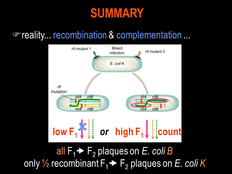  SUMMARY reality... recombination & complementation ...
