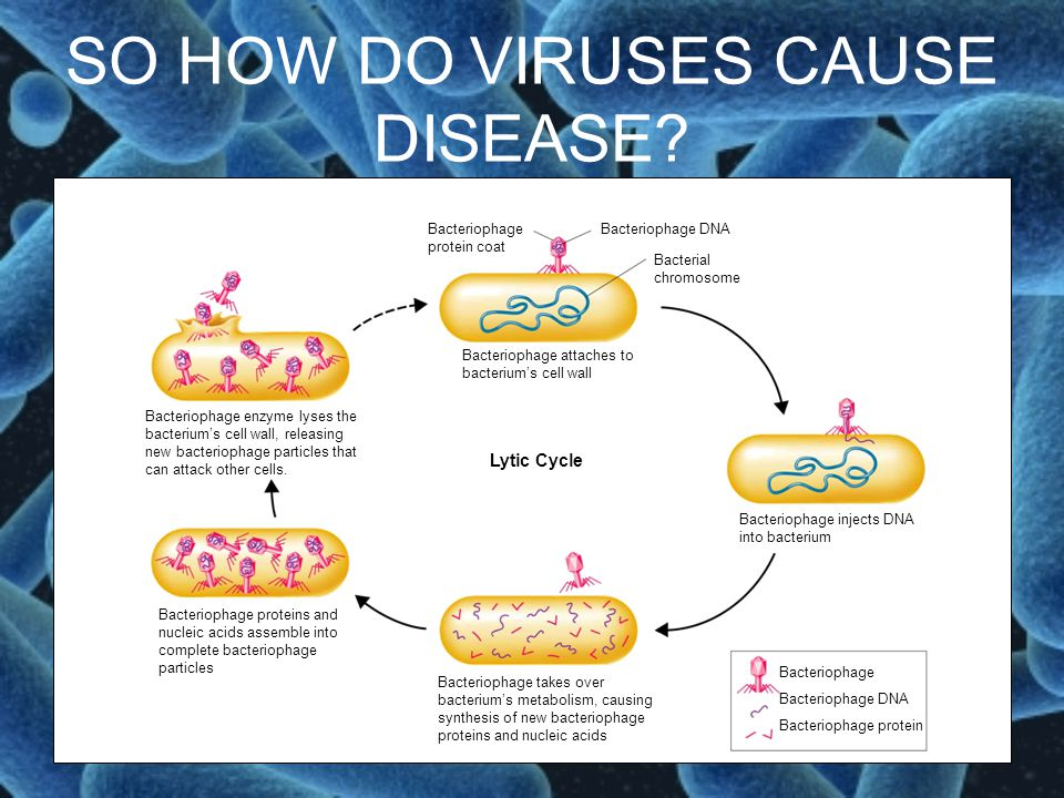 SO HOW DO VIRUSES CAUSE DISEASE