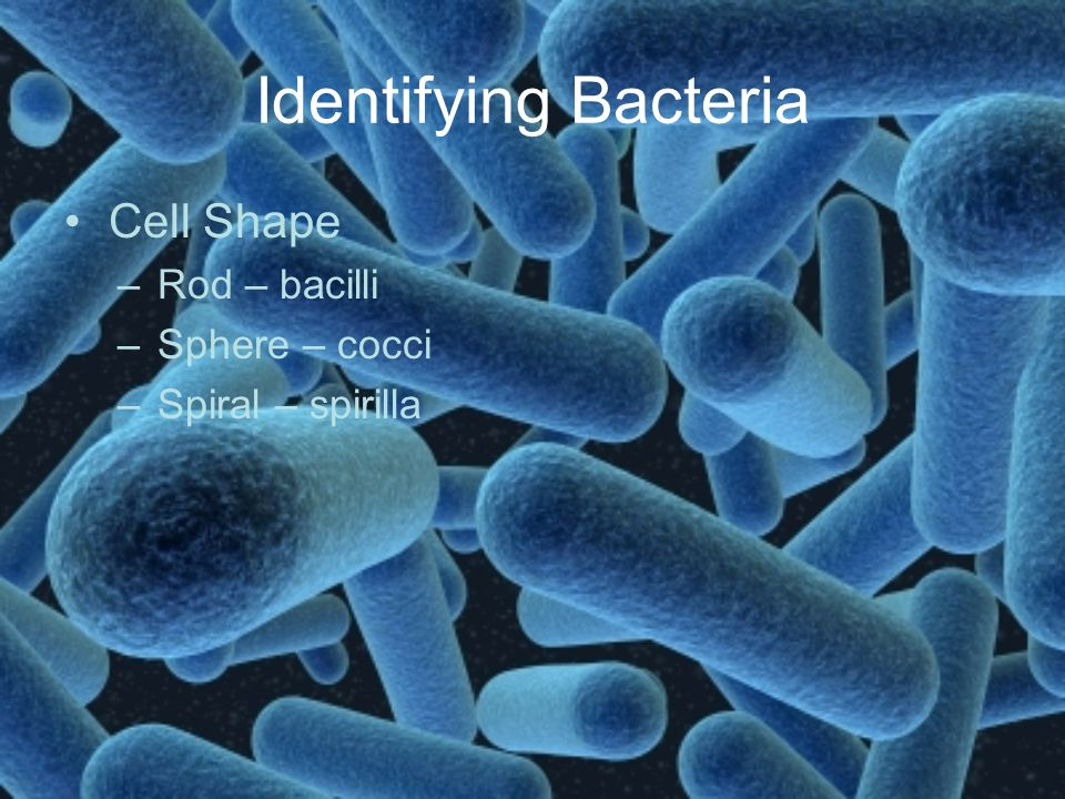 Identifying Bacteria Cell Shape Rod – bacilli Sphere – cocci