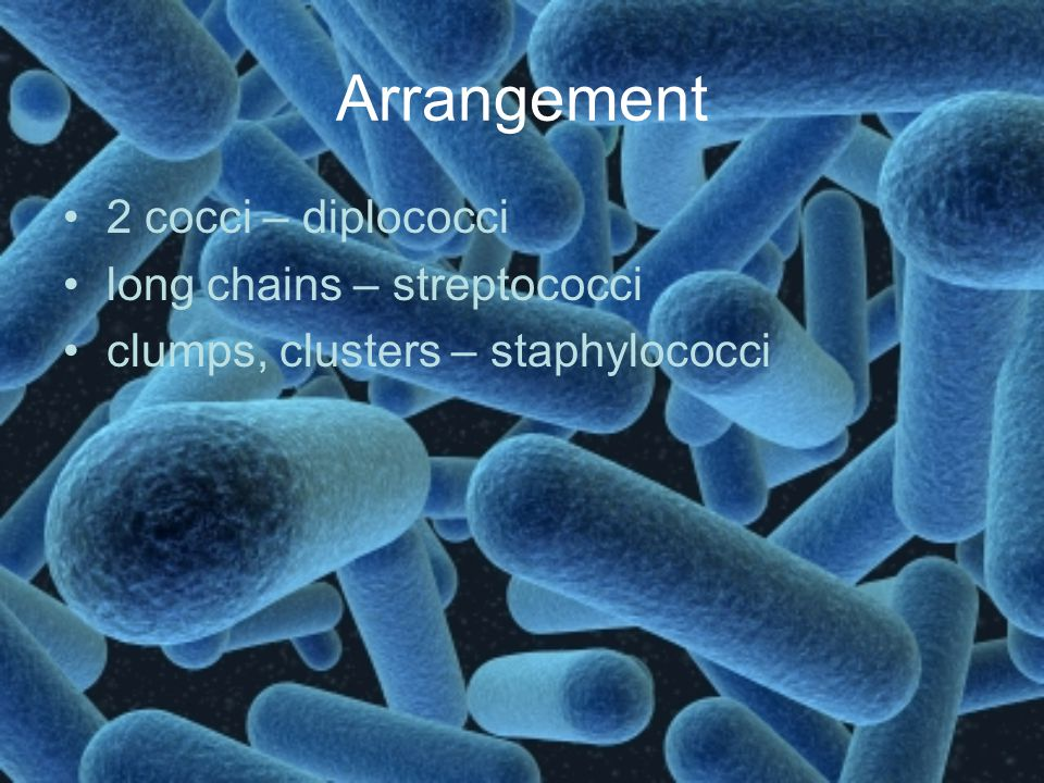Arrangement 2 cocci – diplococci long chains – streptococci