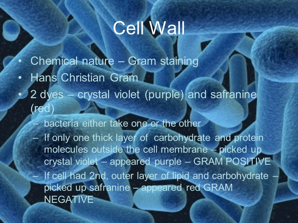 Cell Wall Chemical nature – Gram staining Hans Christian Gram