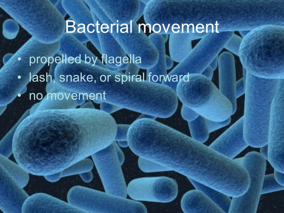 Bacterial movement propelled by flagella