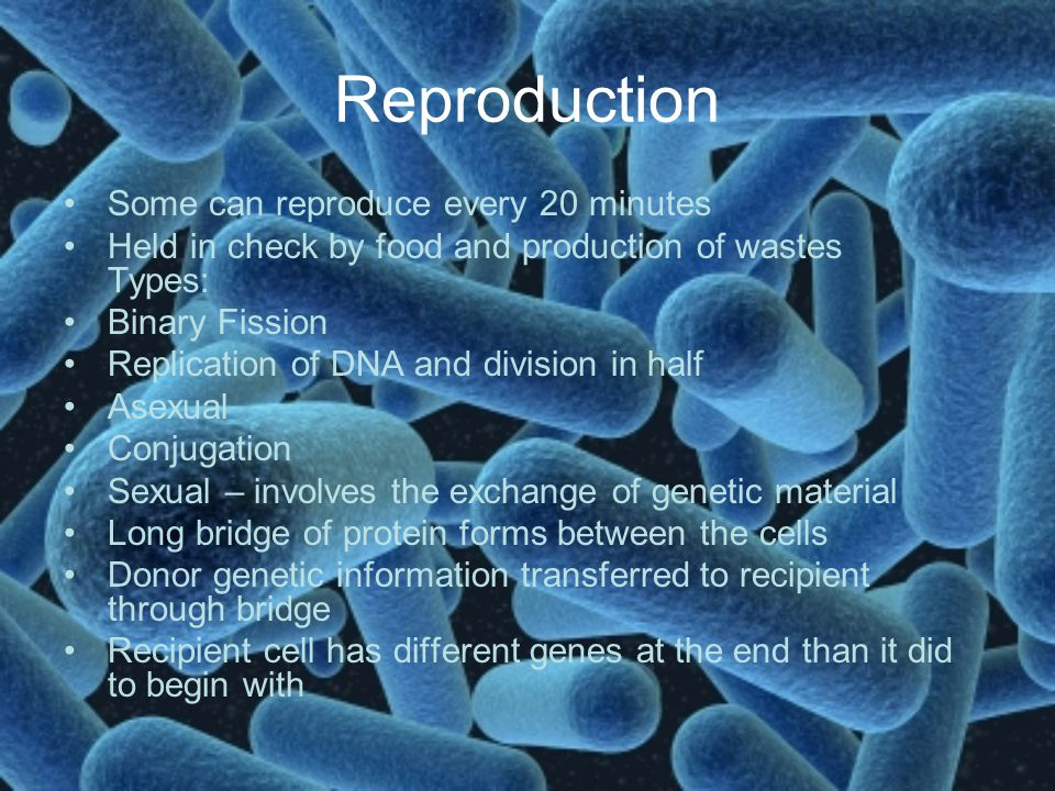 Reproduction Some can reproduce every 20 minutes