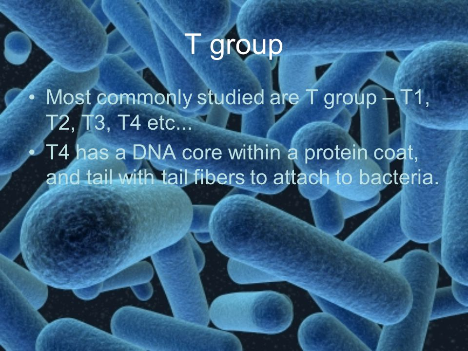 T group Most commonly studied are T group – T1, T2, T3, T4 etc...