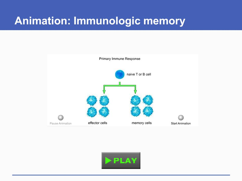 Animation: Immunologic memory