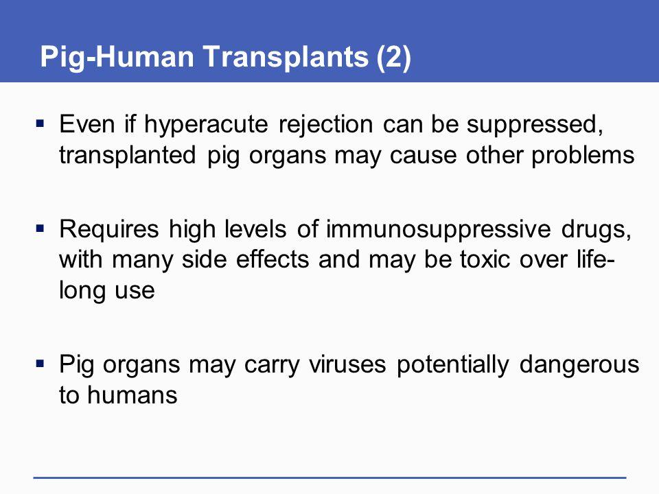 Pig-Human Transplants (2)