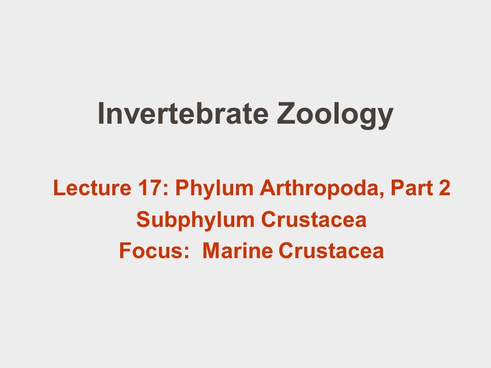 Lecture 17: Phylum Arthropoda, Part 2 Focus: Marine Crustacea