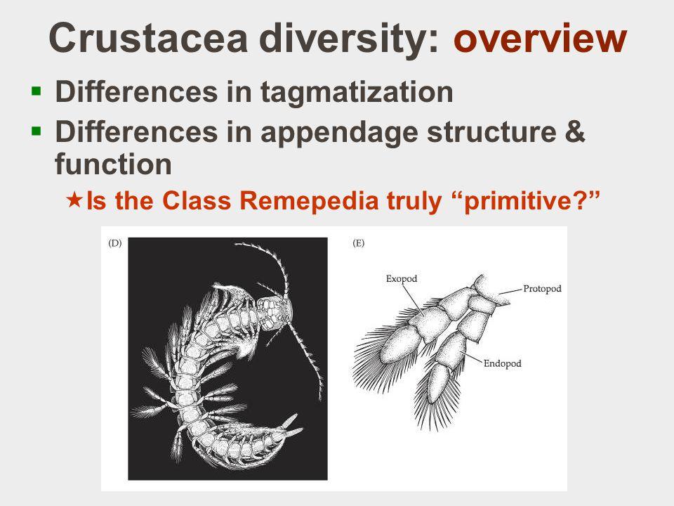 Crustacea diversity: overview