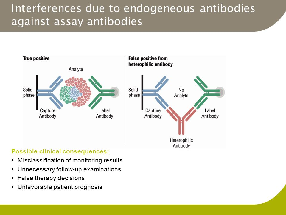 Interferences due to endogeneous antibodies against assay antibodies