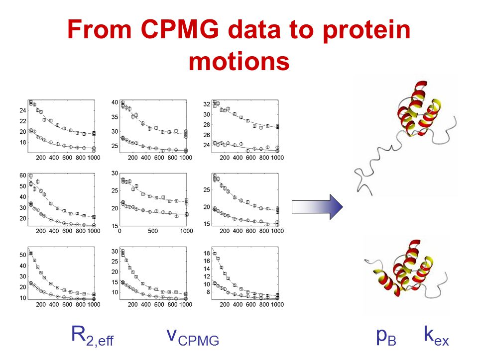 From CPMG data to protein motions