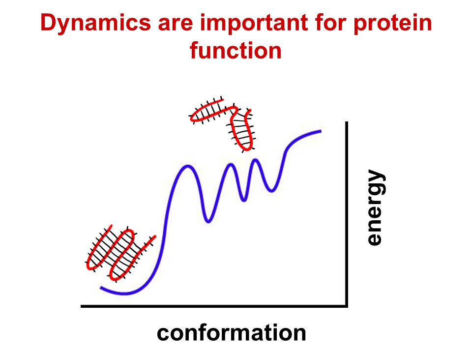 Dynamics are important for protein function