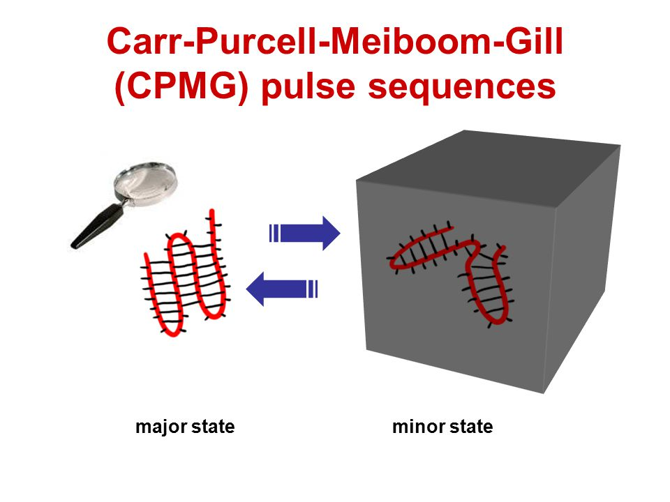 Carr-Purcell-Meiboom-Gill (CPMG) pulse sequences