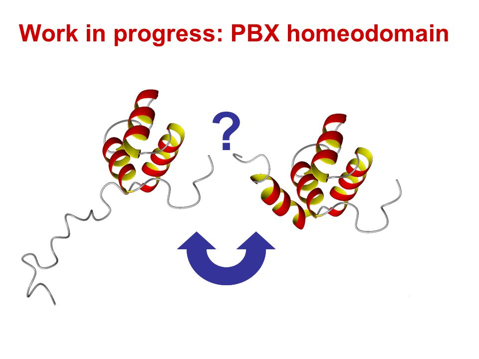 Work in progress: PBX homeodomain