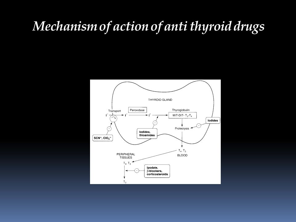 Mechanism of action of anti thyroid drugs