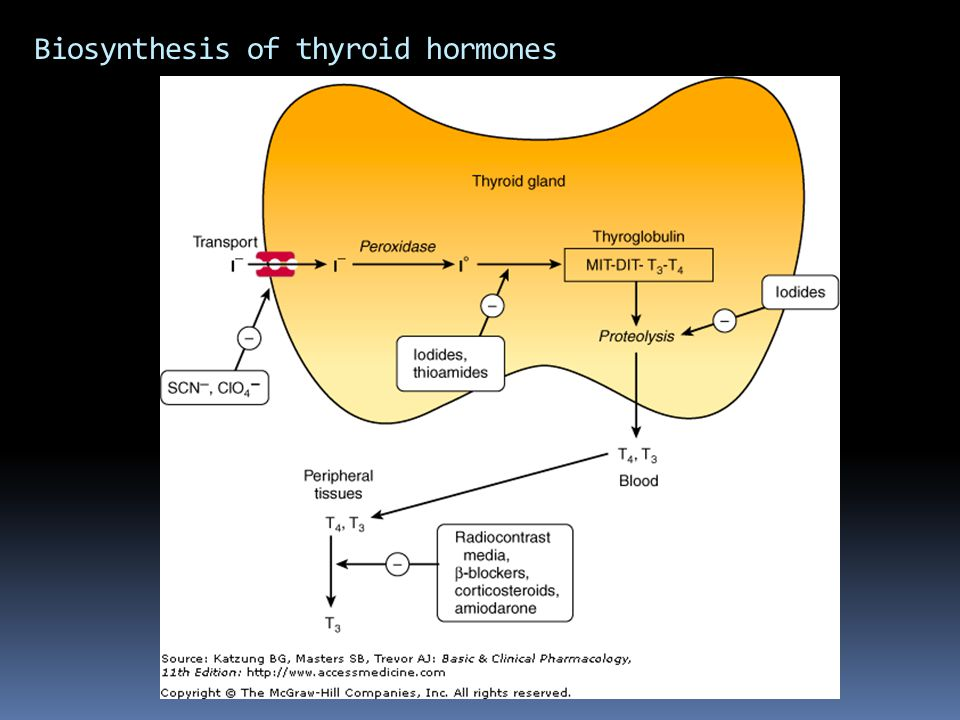 Biosynthesis of thyroid hormones
