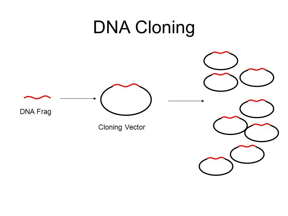 DNA Cloning DNA Frag Cloning Vector