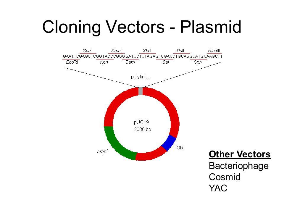 Cloning Vectors - Plasmid