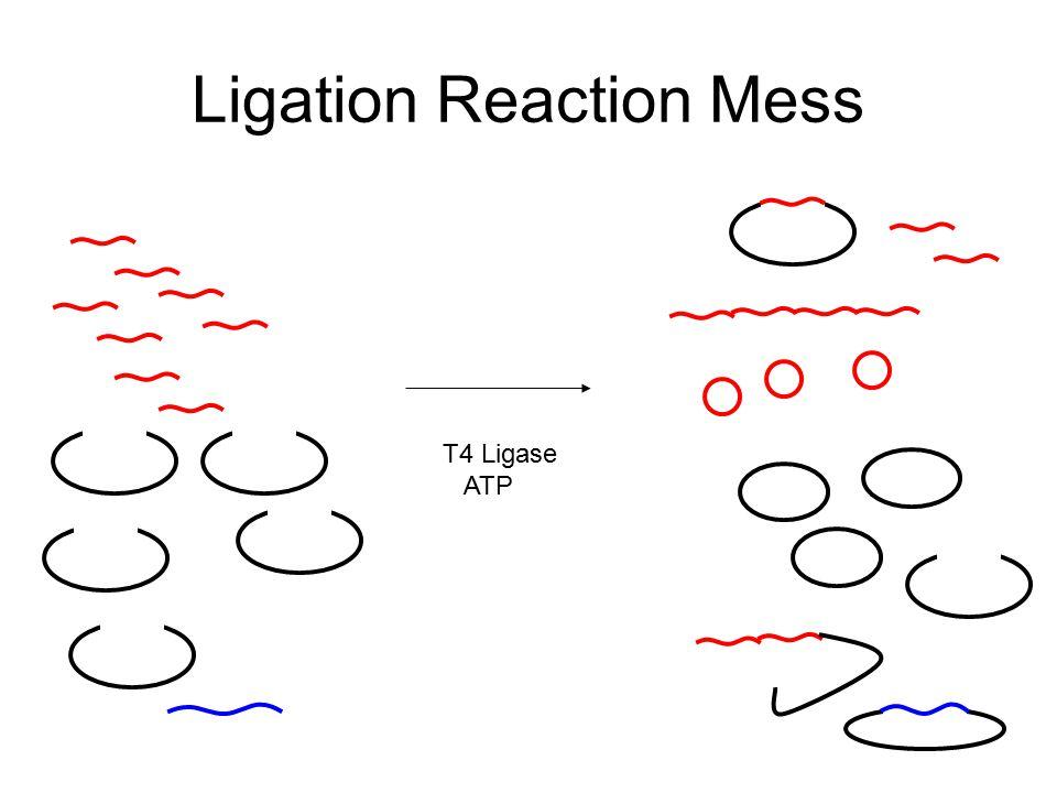 Ligation Reaction Mess