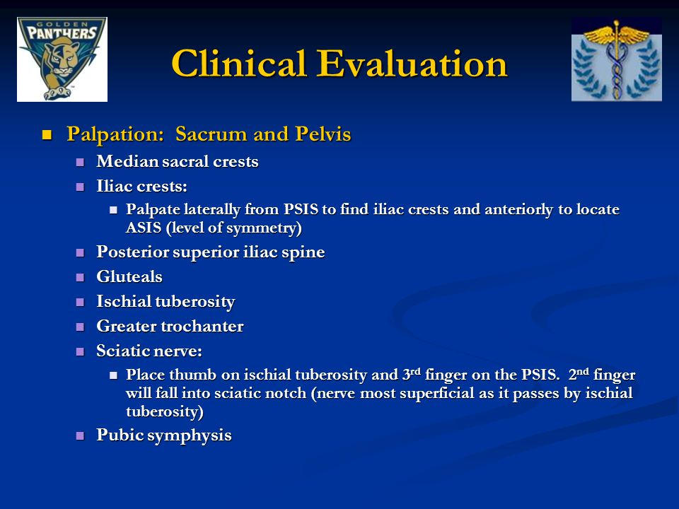 Clinical Evaluation Palpation: Sacrum and Pelvis Median sacral crests