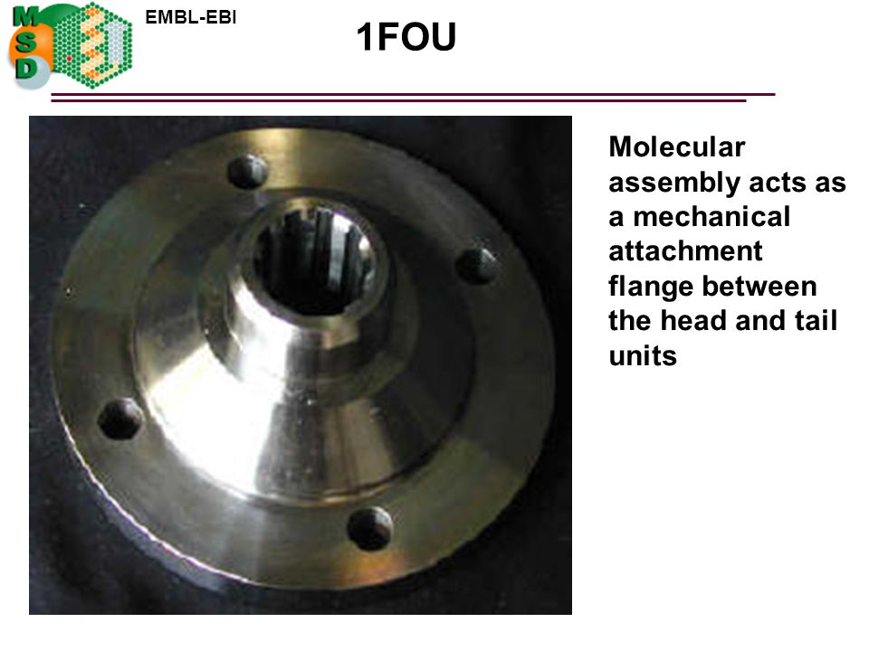 1FOU Molecular assembly acts as a mechanical attachment flange between the head and tail units