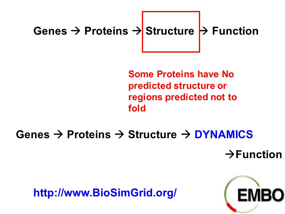 Genes  Proteins  Structure  Function