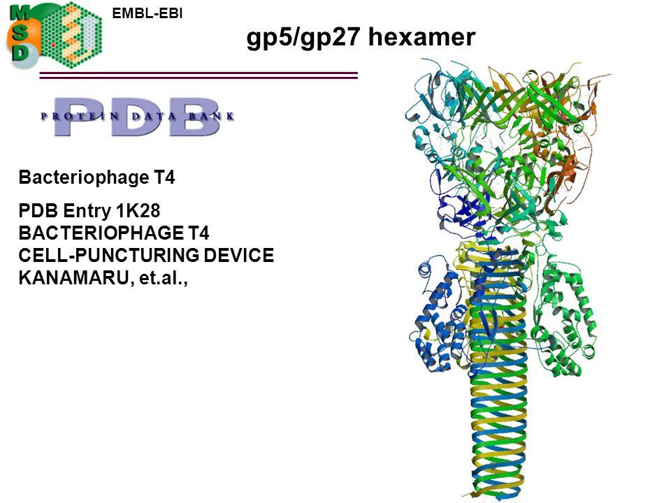 gp5/gp27 hexamer Bacteriophage T4 PDB Entry 1K28 BACTERIOPHAGE T4