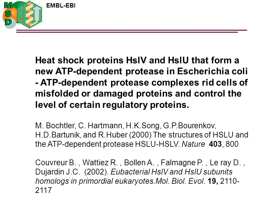 Heat shock proteins HslV and HslU that form a new ATP-dependent protease in Escherichia coli - ATP-dependent protease complexes rid cells of misfolded or damaged proteins and control the level of certain regulatory proteins.