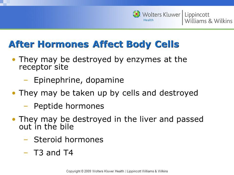 After Hormones Affect Body Cells