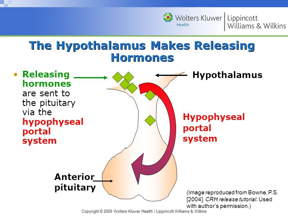 The Hypothalamus Makes Releasing Hormones