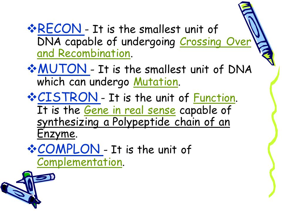 RECON - It is the smallest unit of DNA capable of undergoing Crossing Over and Recombination.