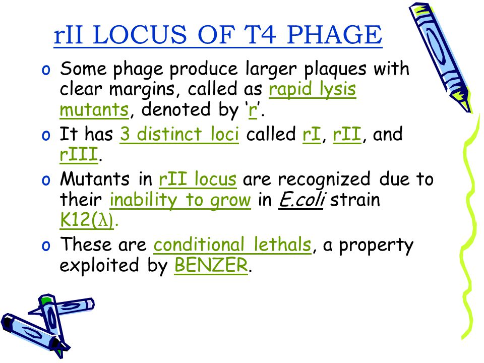 rII LOCUS OF T4 PHAGE Some phage produce larger plaques with clear margins, called as rapid lysis mutants, denoted by 'r'.
