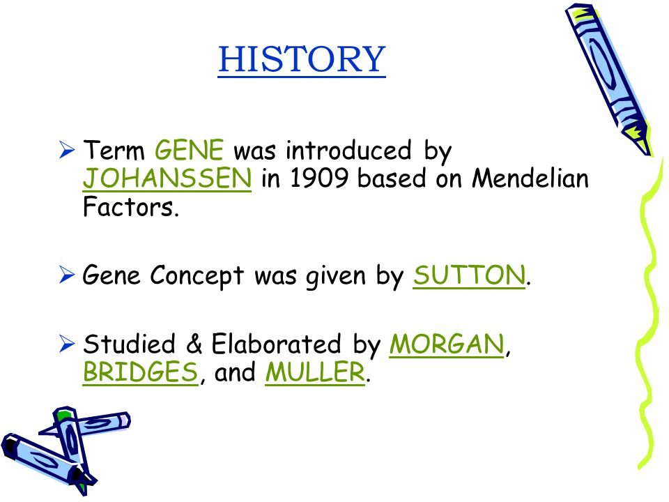 HISTORY Term GENE was introduced by JOHANSSEN in 1909 based on Mendelian Factors. Gene Concept was given by SUTTON.
