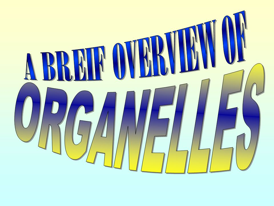 A BREIF OVERVIEW OF ORGANELLES