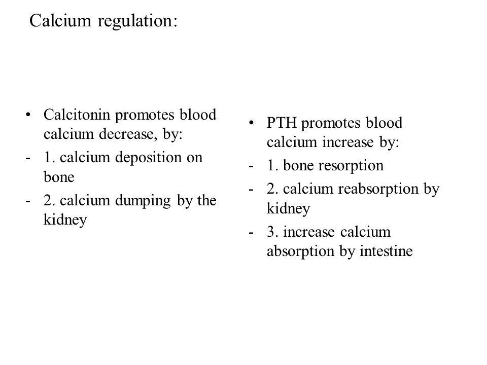 Calcium regulation: Calcitonin promotes blood calcium decrease, by:
