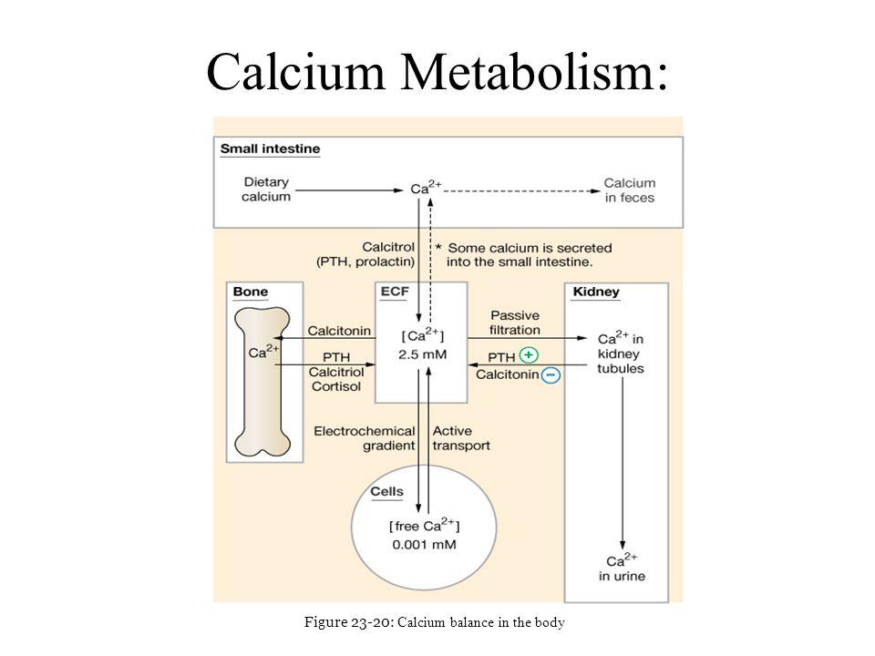 Figure 23-20: Calcium balance in the body