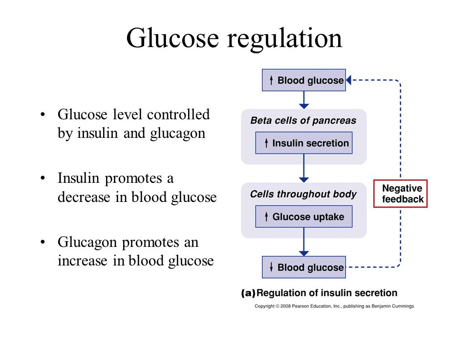 Glucose regulation Glucose level controlled by insulin and glucagon