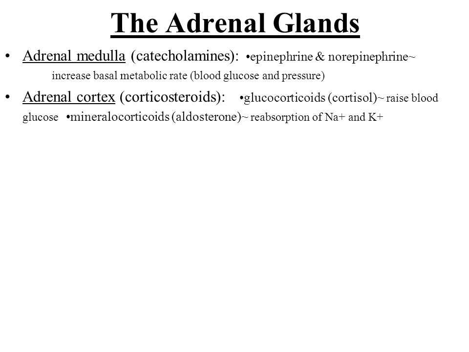 The Adrenal Glands Adrenal medulla (catecholamines): •epinephrine & norepinephrine~ increase basal metabolic rate (blood glucose and pressure)