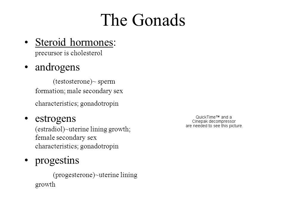 The Gonads Steroid hormones: precursor is cholesterol